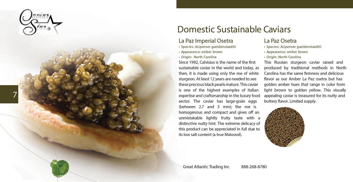 caviar-star-catalog-8.png