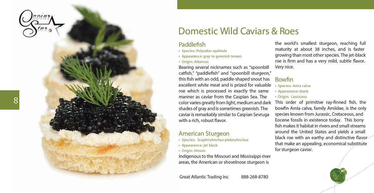caviar-star-catalog-9.png